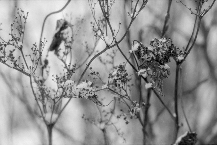 пошаговое плетение розы из бисера. схема маленькой бабочки из бисера. колье из бисера жгуты. вышивка бисером интернет.
