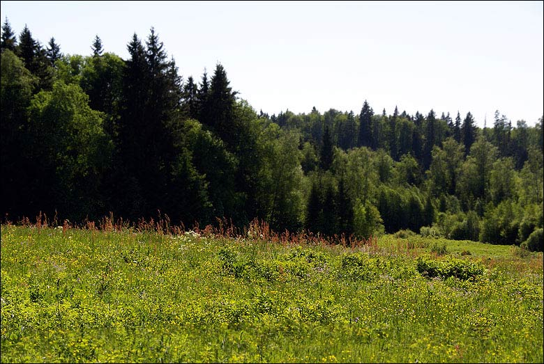 http://turpohod.narod.ru/treks/sav_moroz-berez_len/berez-iksha_03-jun-07_foto/p2-2.jpg